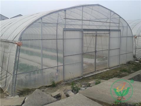 (2)单体大棚框架由镀锌钢管组成,两侧可设侧窗结构,有利于棚内通风